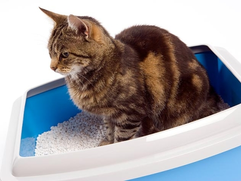 8 Common Reasons Cats Don't Use the Litter box.