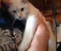 FOUND:  Freindly Cat