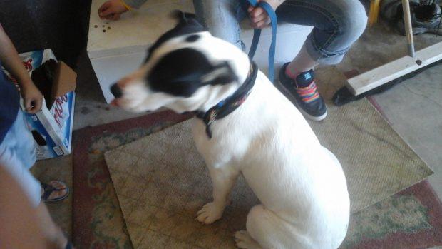 Dog found South of Williston