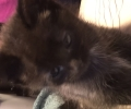 Lost baby kitten