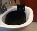 LOST:  BLACK MALE CAT WITH GREEN COLLAR