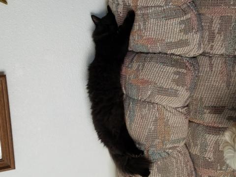 Lost my cat boog