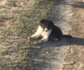 Missing Border Collie