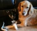 Dottie loves her new sister