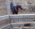 Jazzy our Rottweiler