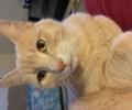 Lost Cat Fendee Estates!
