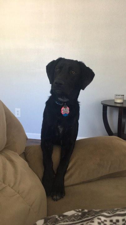 Luna (pending adoption)