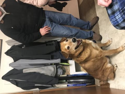 Found dog