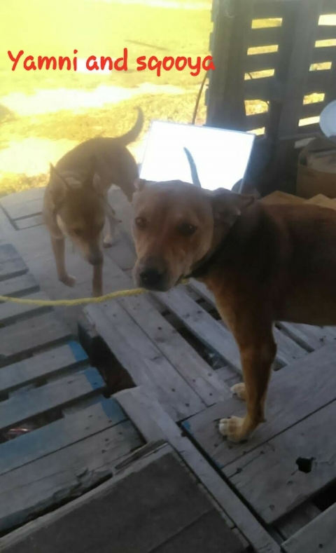 Brother n sister abandoned in Newtown  and belcourt