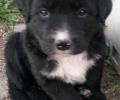 Pongo the pup!