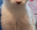 Abu the kitty!