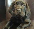 Moose Pup
