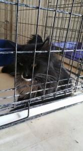 poundcat2