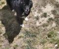 Lost dog was locked in my yard on 29th St.W