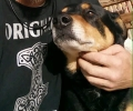 Lost male dog. 13 yrs age