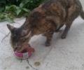 Older kitten