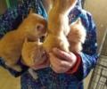 Kitten Litter 7