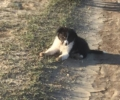 Missing Border Collie