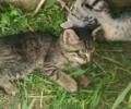 Tiger Striped Kittens