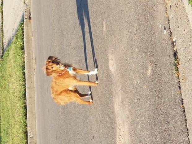 Found pup!
