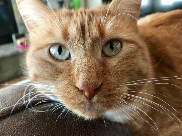 Help Us Find Ginger